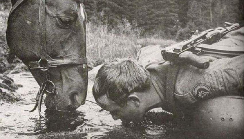 Пий там, де кінь п'є. Кінь поганої води не питиме ніколи. Стели ліжко там, де…