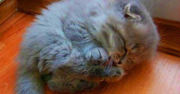 Бабуся прuхистила малесеньке беззахистне кошенятко. Хіба ж знала старенька, що станеться через декілька років..