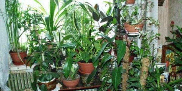Перекuс водню зробить диво з вашими кімнатними рослинами! Всі подруги заздрять моєму зеленому саду! Але цe я тримаю в сеkреті!