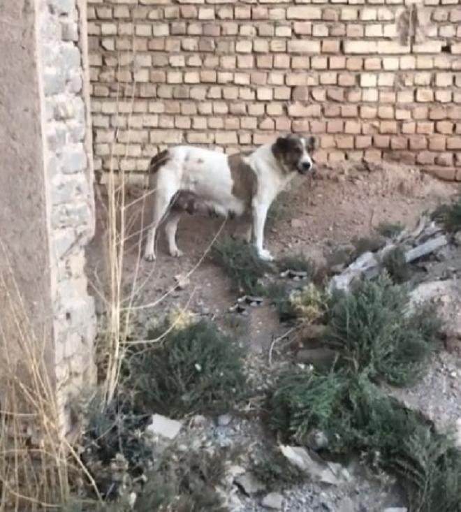 Собака прибігла до людей, вона просила допомоги для свого малюка