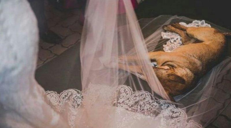 Під час весілля до церкви зайшов безпритульний пес і ліг на фату молодої. Те що сталося дальше просто ш0кує