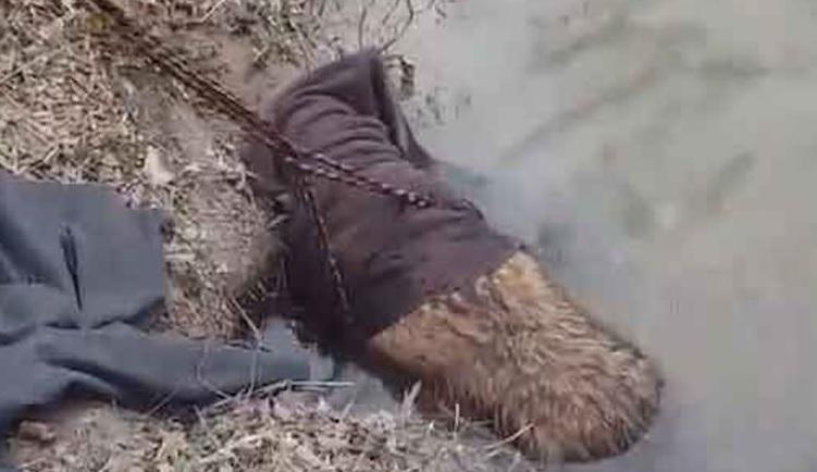 На березі річки чоловік помітив граючих бобрів, але потім зрозумів, що це не бобри