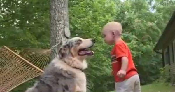 Чоловік помітив, як його собака кинулася у бік малюка. А потім він зрозумів, що вона врятувала дитині життя!