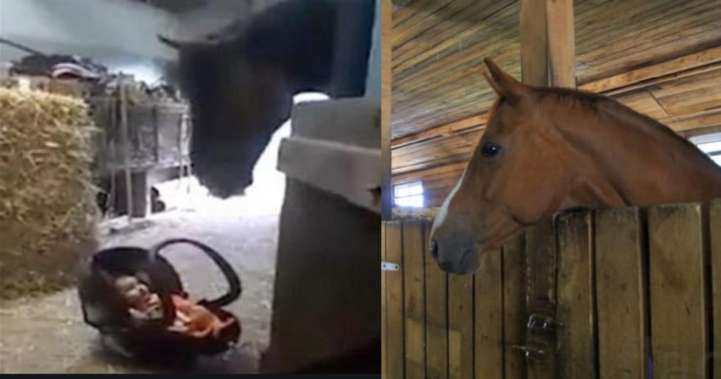 Мама тільки на хвилину залишила свого малюка в стайні. Але те, що кінь зробив коли дитина розплакалася – потрібно бачити!