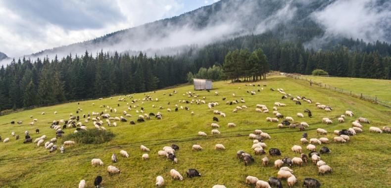 Літо в Карпатах 2021: ТОП-5 найкрутіших місць для відпочинку, від яких ви будете в захваті
