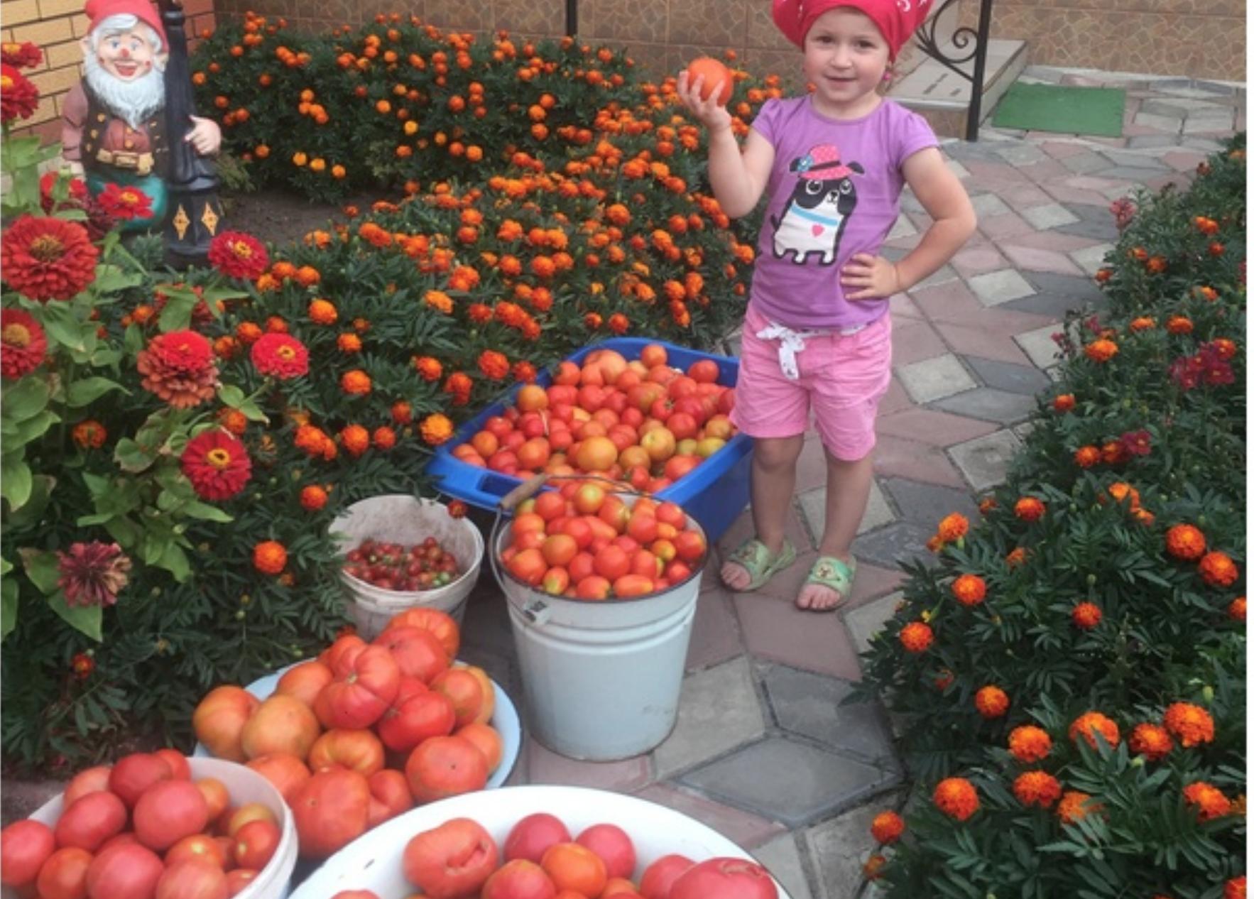 У бабусі в селі завжди величезний урожай помідорів. Незнаємо куди їх дівати. Хочу поділитися секретом з вами