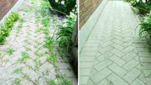 Більше не турбує бур'ян на садовій доріжці. Простий, а головне, ефективний і перевірений засіб. Все, що вам потрібно, у вас уже є!