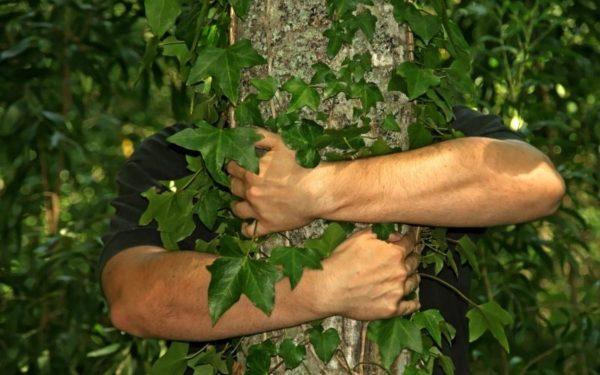 Яке дерево обійняти, щоб позбутися хвороб: 5 дерев-цілителів з найсильнішою енергетикою