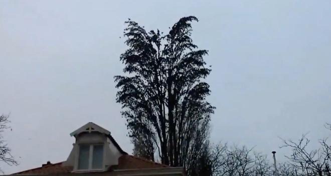 Чоловік просто знімав на телефон дерево на відео. Тепер уважно дивіться на десяту секунду